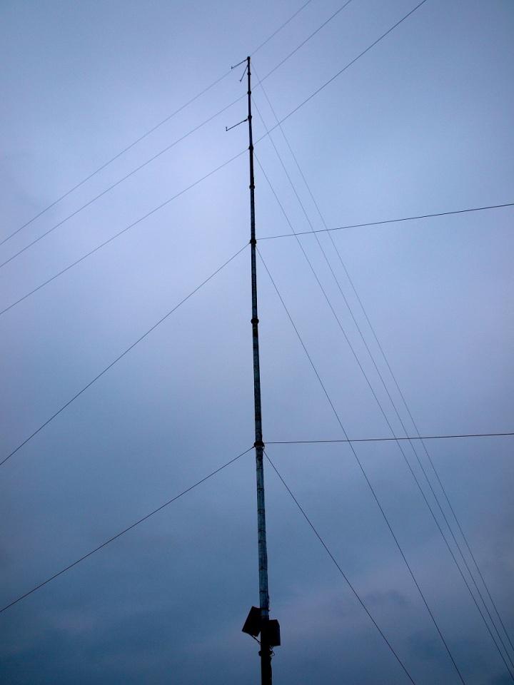 A big antennae