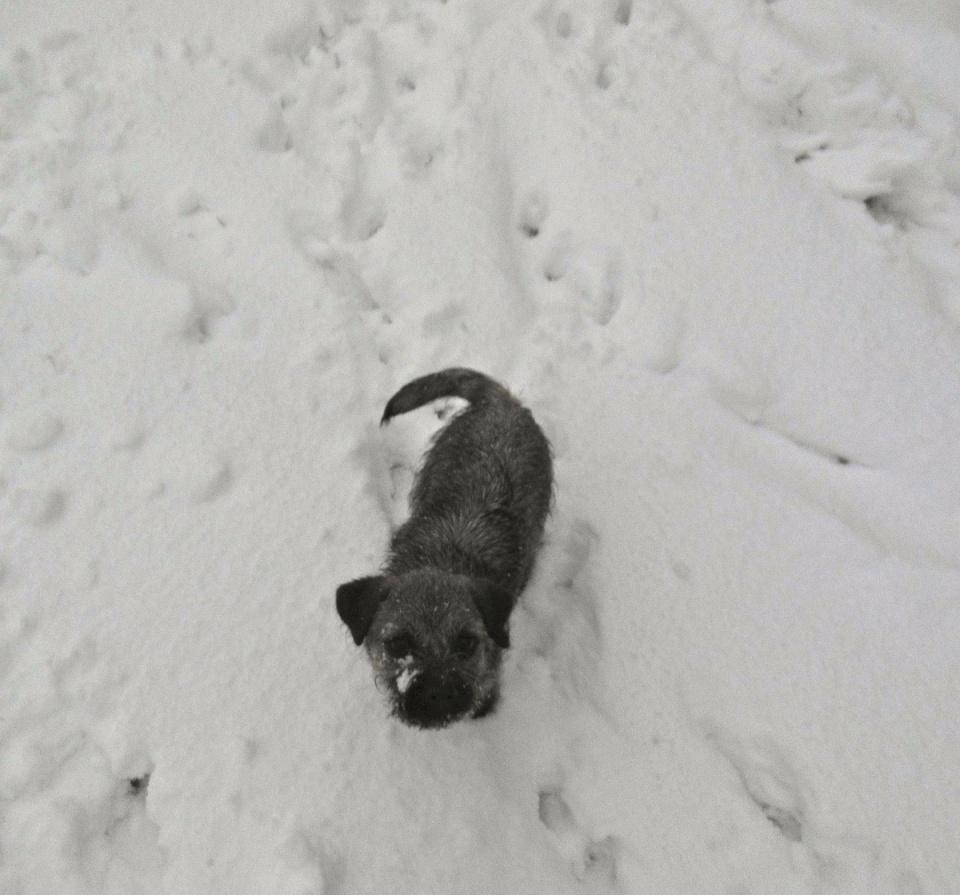 Snow confusion