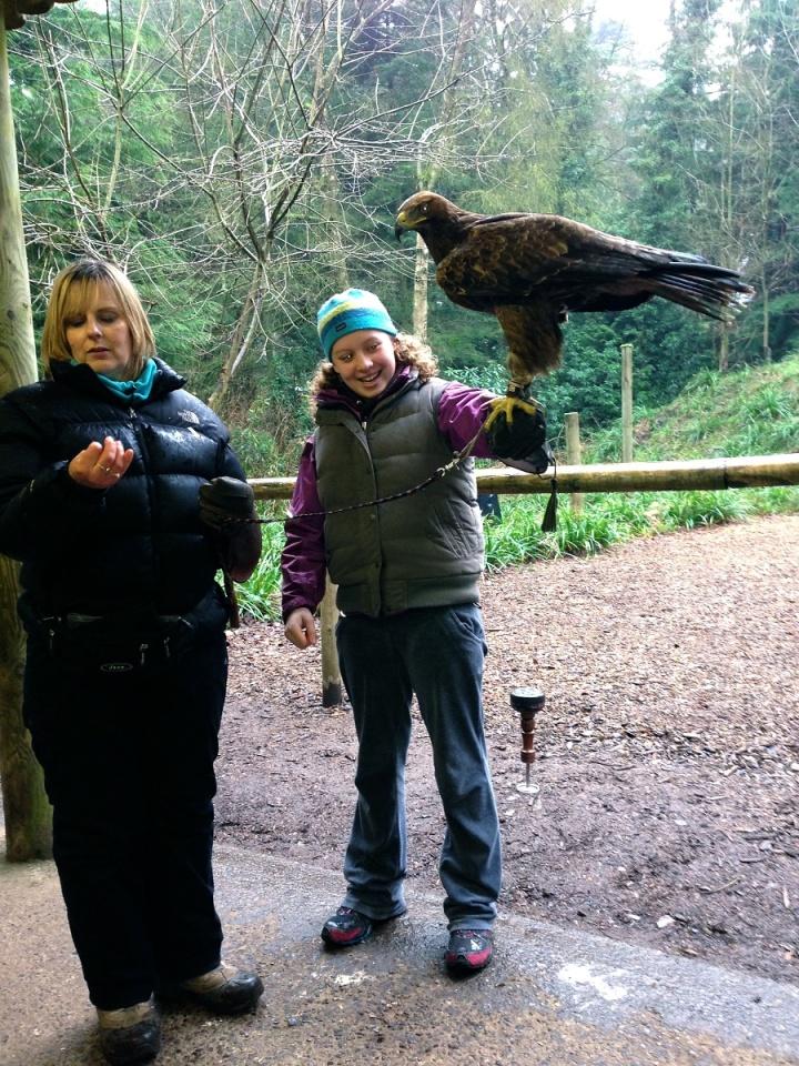 Eagle taming