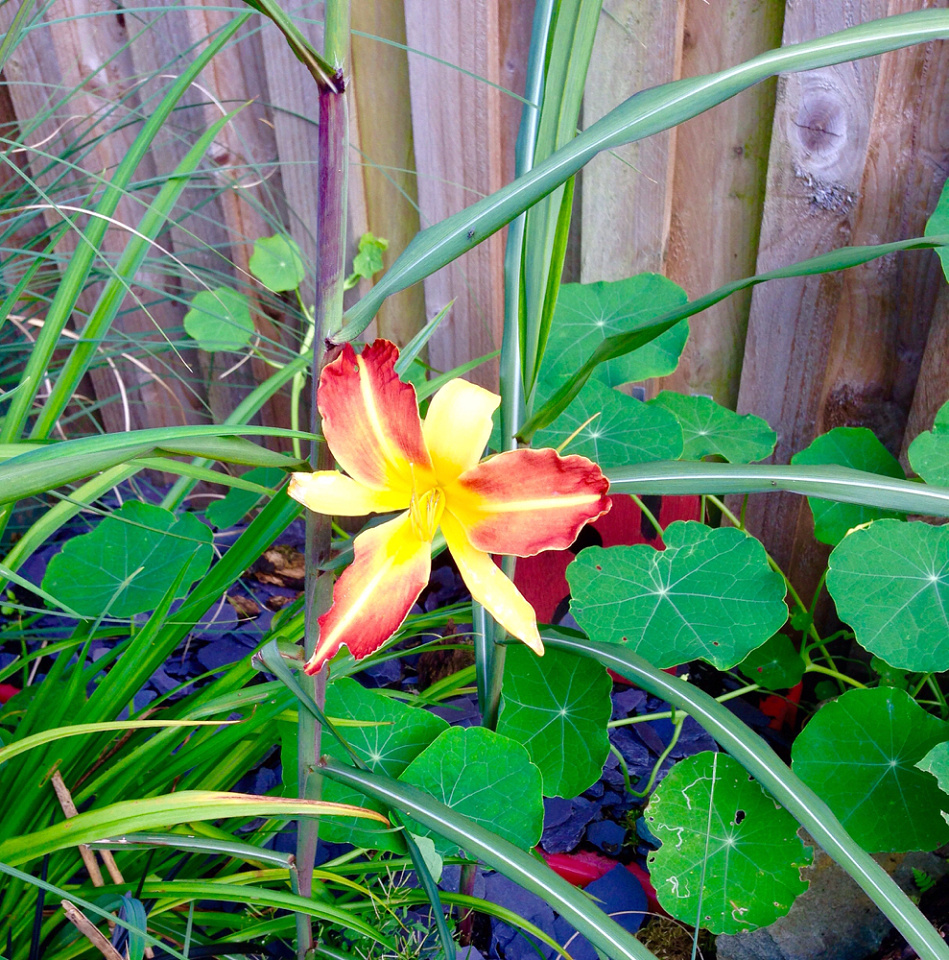 The resilience of lillies