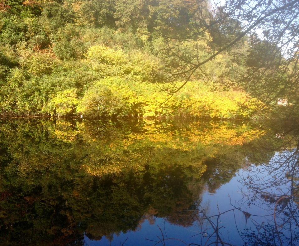 Taff reflections