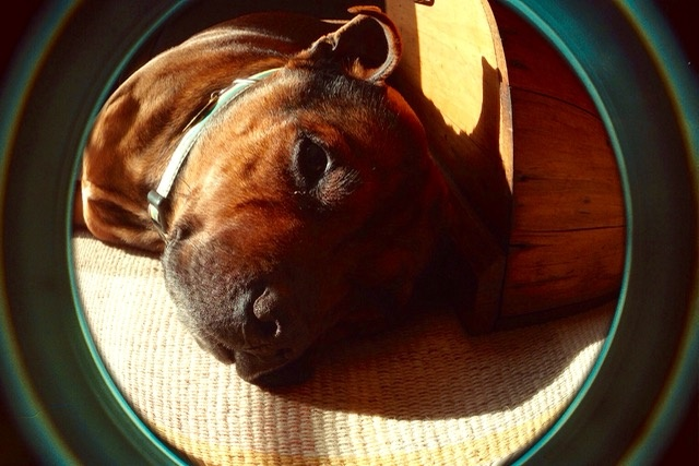 Fisheye dog