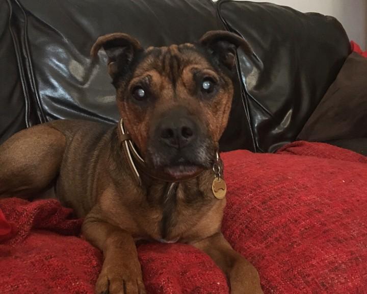 Lazarus dog