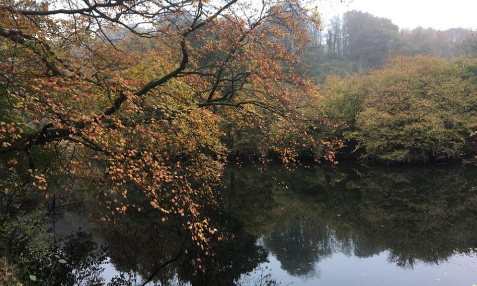 Taff in autumn